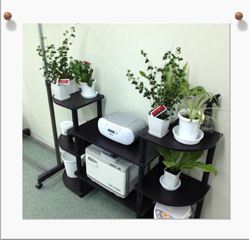 植物02.jpg